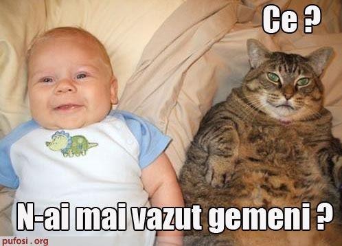 Imagini pentru imagini hazlii cu pisici