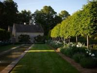 Small trees that provide hedge | backyard living ideas ...