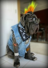 1000+ images about English Mastiff Costumes on Pinterest ...
