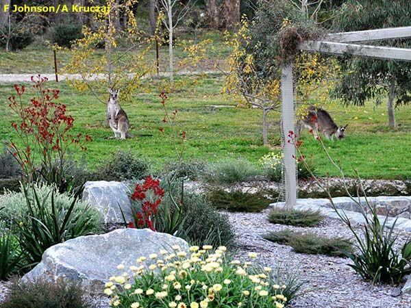 17 Meilleures Images à Propos De Backyard Sur Pinterest Jardins
