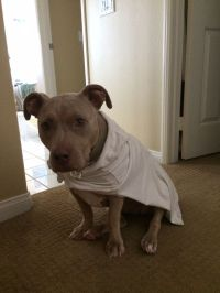 1000+ images about dogs in clothes on Pinterest   Dog ...