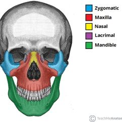 Bones Of The Skull Anterior View Diagram Wiring For Starter Relay Facial : 14 , Only Mandible And Vomer Are Unpaired . All Them Except Mondible ...