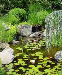 1000+ ideas about Small Backyard Ponds on Pinterest | Diy ...