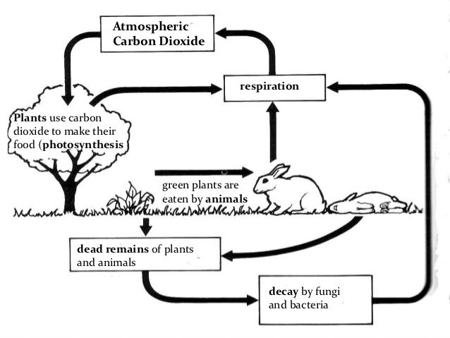 1000+ images about Biogeochemical Cycles on Pinterest