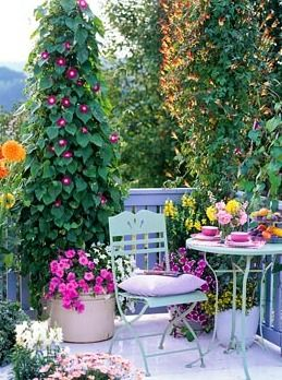 The 25 Best Ideas About Balcony Flowers On Pinterest Small