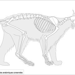 Beaver Skeleton Diagram Yamaha Wiring Diagrams 17 Best Images About Quadruped Reference On Pinterest | Wolves, Dog Anatomy And Workshop