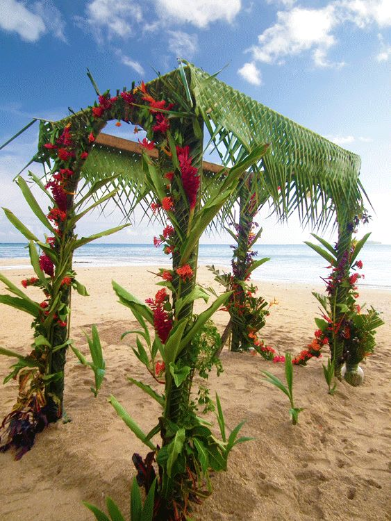 Beautiful wedding arch with braided palm leaves and vibrant flowers fiji wedding  Weddings