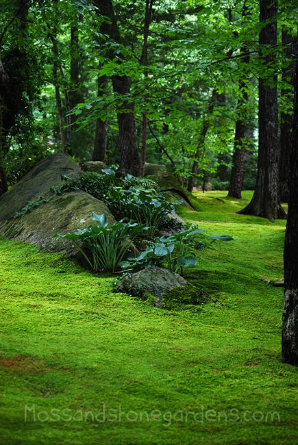 hostas on stone hill in moss lawn