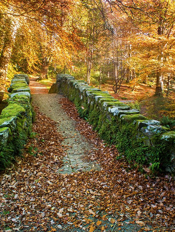 A rustic carpet of leaves leads the way across Foley's Bridge in the heart of Tollymore Forest near Newcastle, County Down. ©Visual Imagery by Jarlath Gray:
