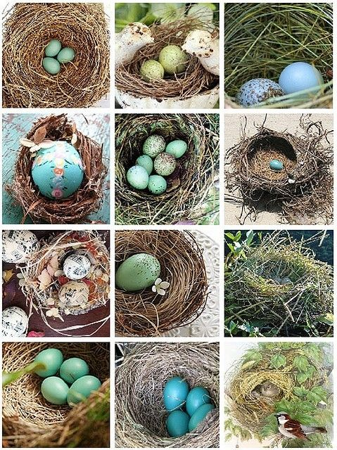 How can you not love a nest by brandi  Natural Beauty