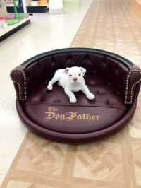 Best 25+ Custom dog beds ideas on Pinterest   Wood dog bed ...