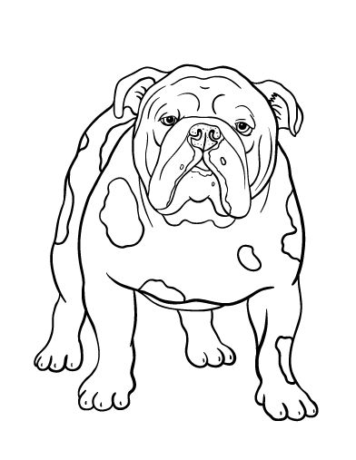Printable bulldog coloring page. Free PDF download at http