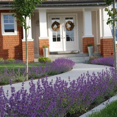 lavender border garden