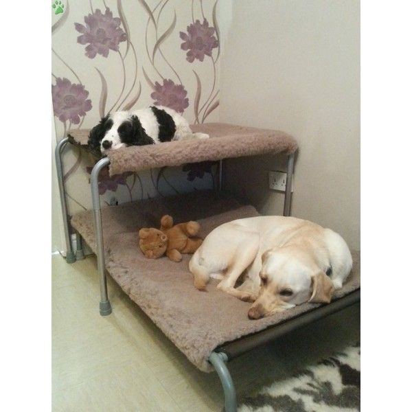 Best 25+ Dog bunk beds ideas on Pinterest
