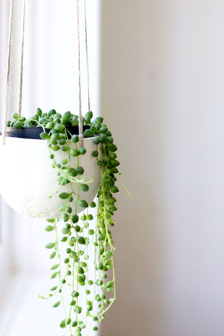 Indoor Hanging Vine Plants