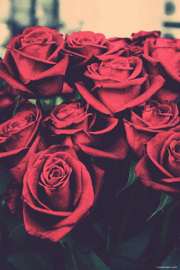 knumathise red roses tumblr