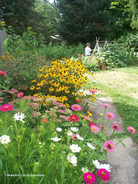 summer perennials for border flower beds:  black-eyed susans, zinnias, cosmos, a