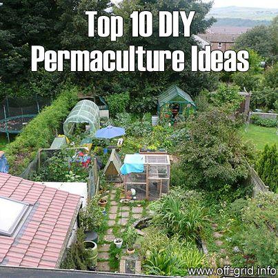 25 Best Ideas About Permaculture Garden On Pinterest