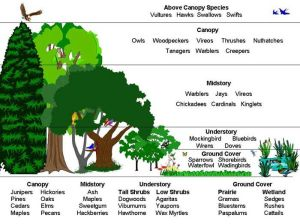 layers of the rainforest | This diagram shows the varying