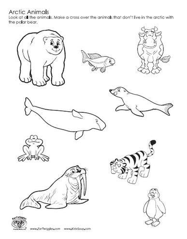25+ Best Ideas about Arctic Tundra Animals on Pinterest