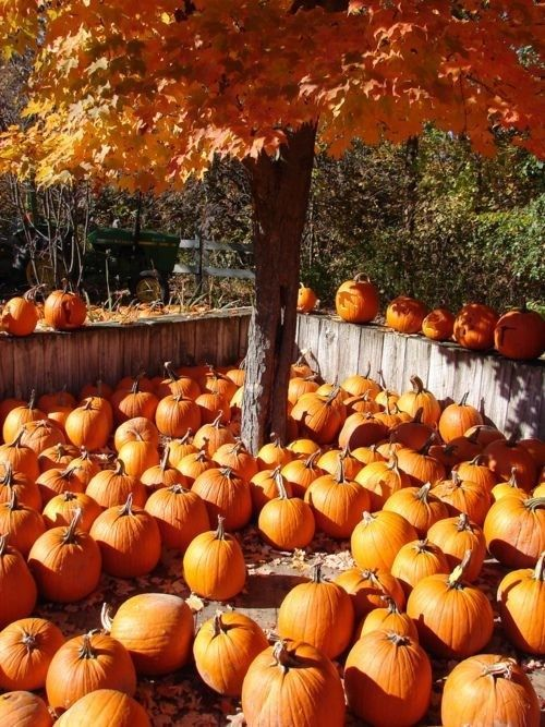 Fall Scenes Wallpaper With Pumpkins 17 Best Images About Country Fall Amp Autumn Leaves On
