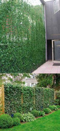 25+ best ideas about Privacy Plants on Pinterest | Garden ...