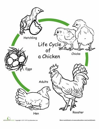 172 best images about Life Science- Animal Life Cycles on