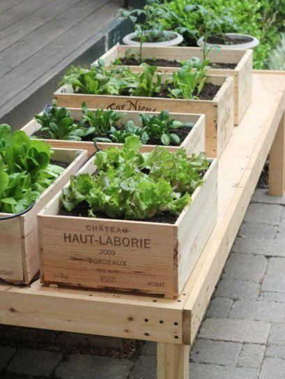 È possibile piantare nello stesso contenitore due o tre specie differenti di lattuga in modo da avere sempre insalate varie e gustose