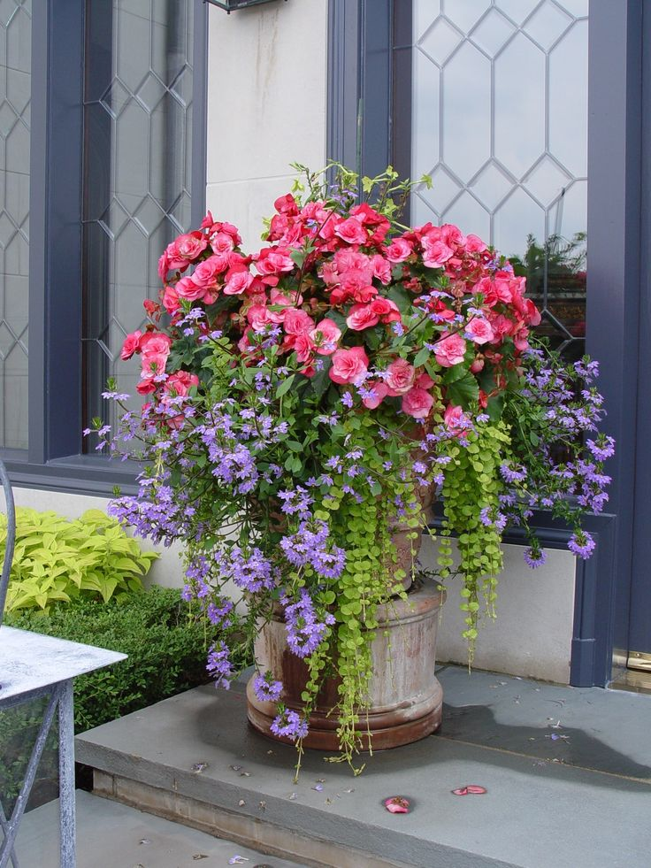 2230 Best Images About Container Plants Spring Summer On