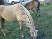 fawn and hair style horse