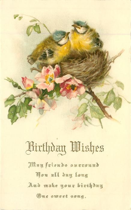 BIRTHDAY WISHES Two Blue Tit Chicks On Nest In Wild Roses