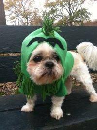 17 Best images about Grinch on Pinterest | Dog costumes ...