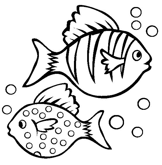 25+ Best Ideas about Pictures Of Fish on Pinterest
