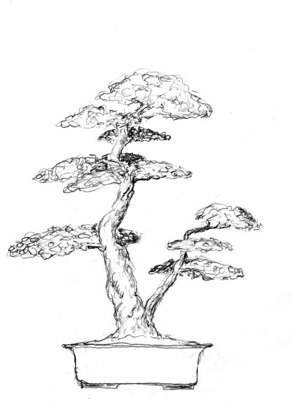 20 Best Bonsai Trees Images