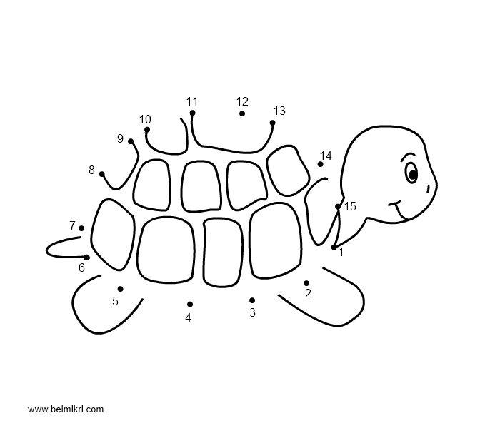 1000+ images about Sheldon the Turtle Unit on Pinterest