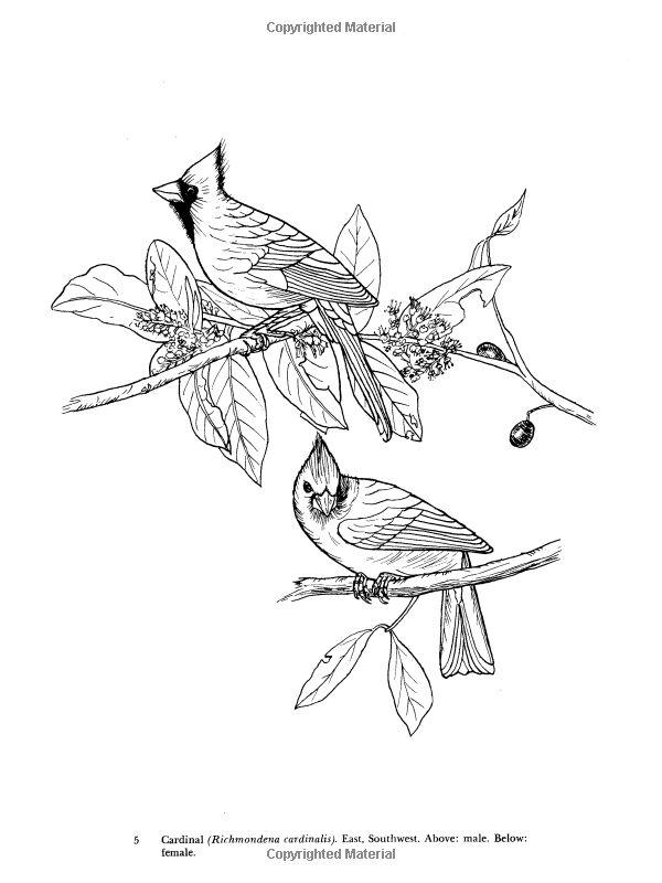 252 best images about coloriage oiseaux on Pinterest