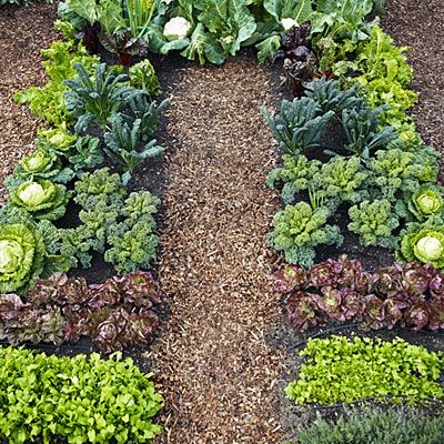 201 Best Images About Gardening Backyard Vegetables On