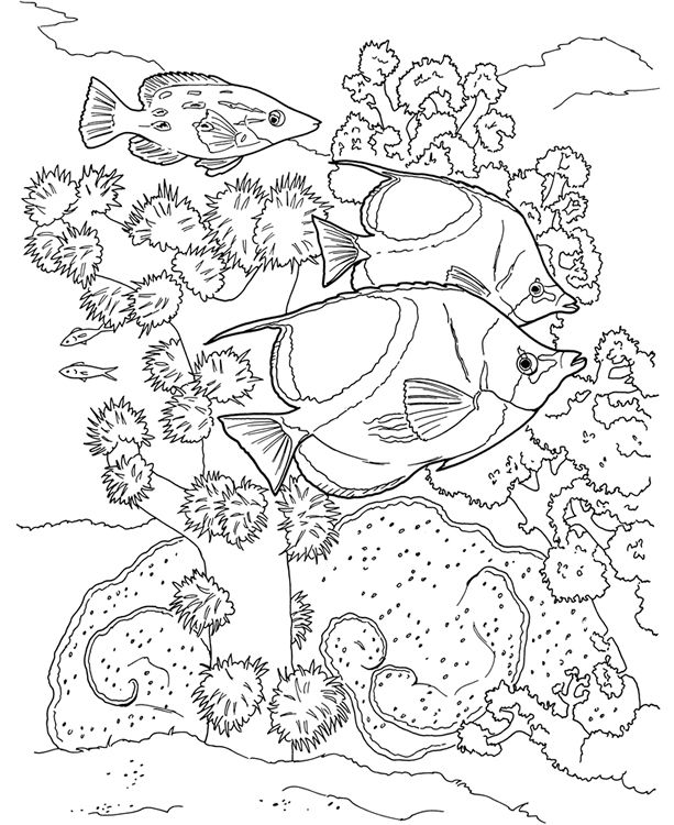 17 Best images about Coloring Pages/LineArt Animals-Ocean
