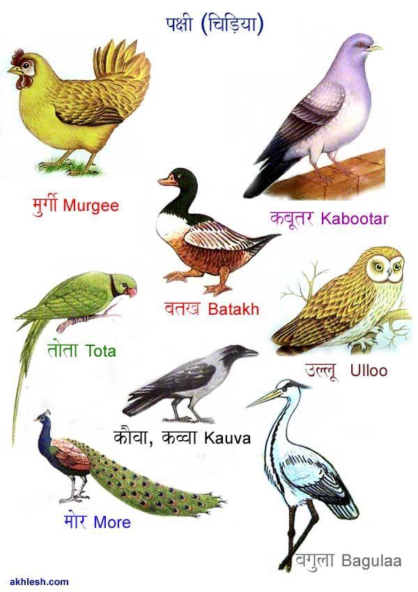 Birds in Hindi (   / ); (Hindi taal
