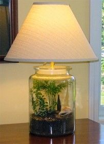 Fillable lamp base  Terrarium  Pinterest  Lamp bases Love and Glasses