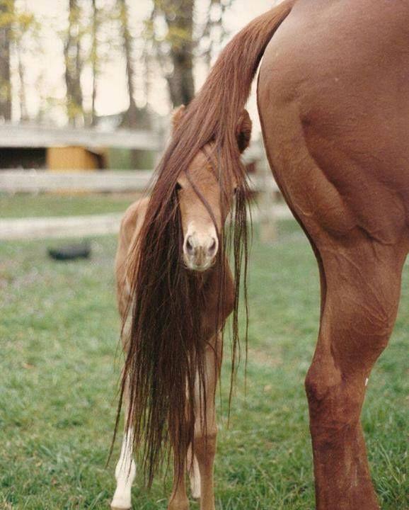 Die 25 besten Ideen zu Fohlen auf Pinterest  Se baby Pferde Pferde und Baby pony
