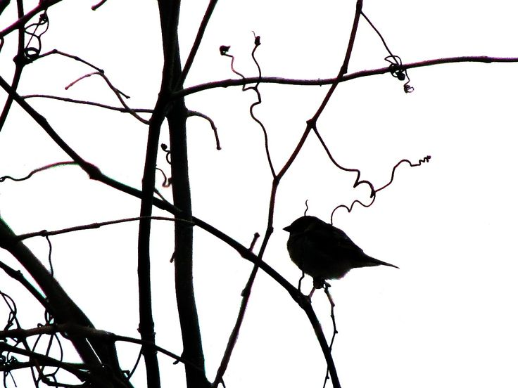 47 best images about Silhouette on Pinterest