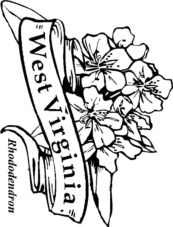 images of west virginia state flowers coloring pages