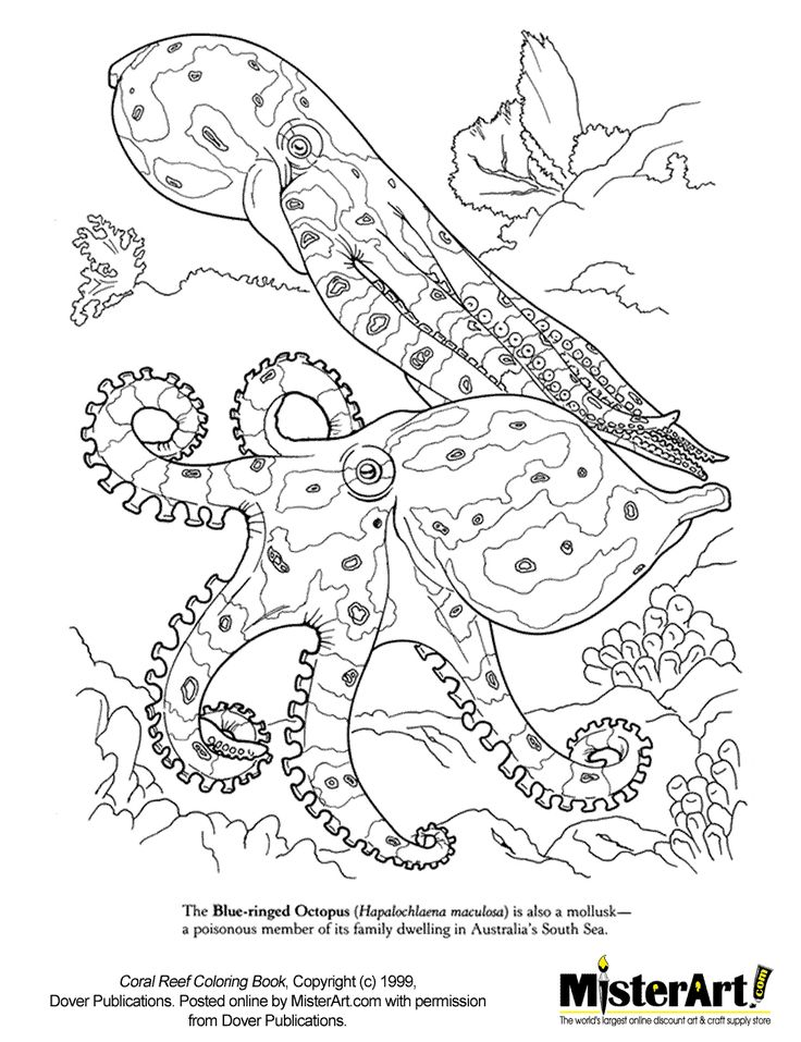Coral Reef Coloring Pages Coral Reef Coloring Pages