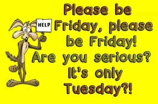 Tuesday Morning Cartoons