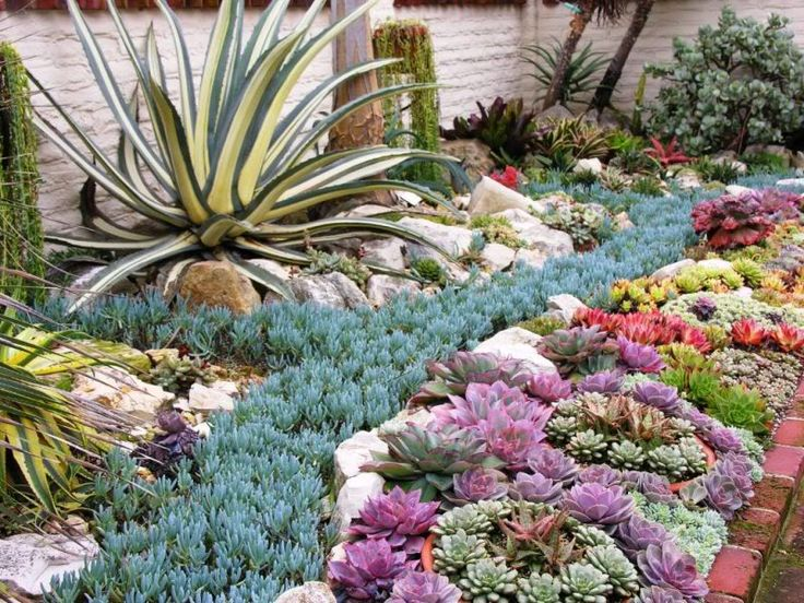 25 Best Ideas About Succulent Landscaping On Pinterest