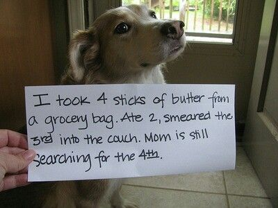 67 best images about Doggy Shame on Pinterest | Blame. Downward dog and My mom