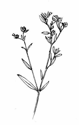 1000+ images about Botanical Black/White Illustrations on