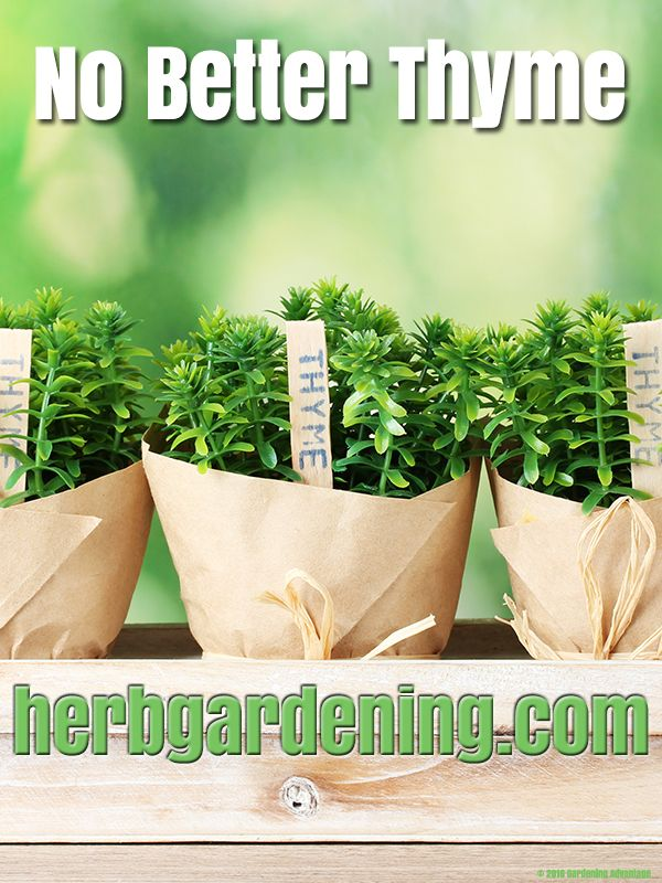 1000 images about Growing Herbs Indoors on Pinterest  Indoor Kitchen herb gardens and Herb plants