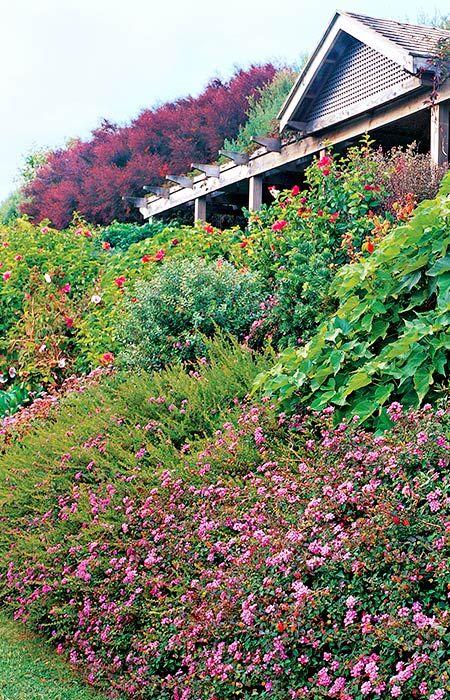Best 25 Landscaping A Slope Ideas On Pinterest Sloped Yard